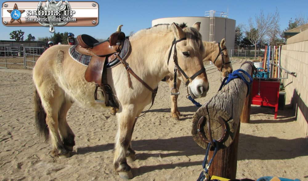 Saddle Up Therapeutic Riding Stables